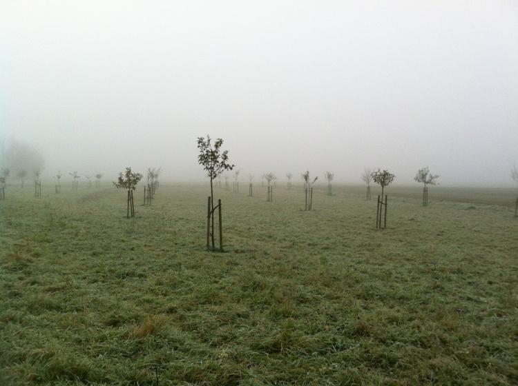 Посадка деревьев и кустарников